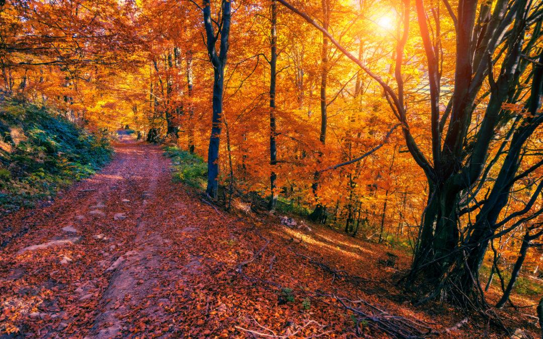 Podzimní prázdniny 26.10. – 30.10.